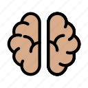 brain, mind, head, medical, anatomy