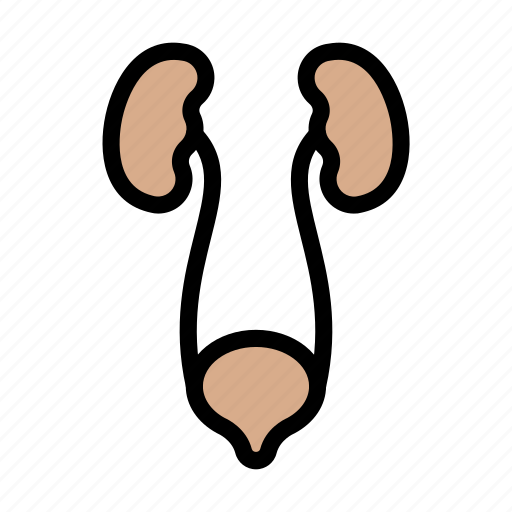 Excretory, urine, medical, body, anatomy icon - Download on Iconfinder