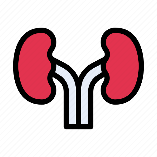 Kidney, urine, body, medical, organ icon - Download on Iconfinder