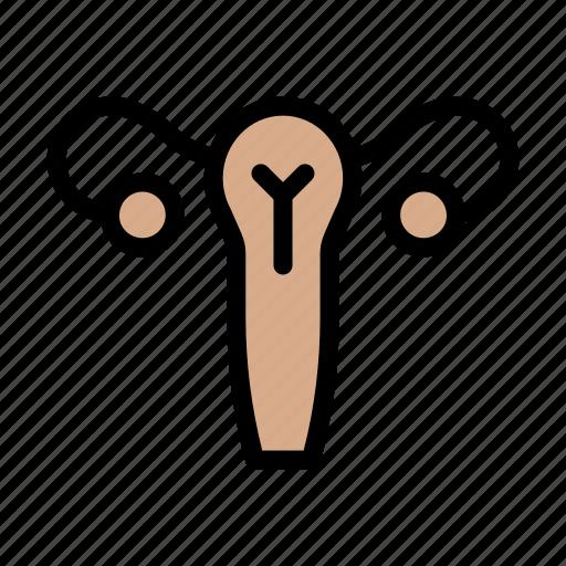 Urine, medical, excretory, body, organ icon - Download on Iconfinder