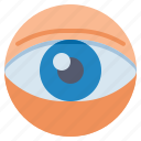 anatomy, eye, view, vision