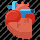 anatomy, health, heart, medical