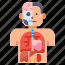 anatomy, medical, organs, vital icon