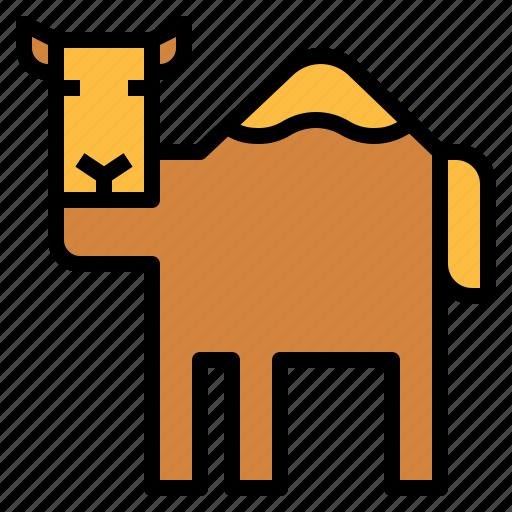 animal, camel, desert, zoo icon