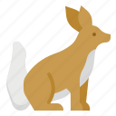 animals, fox, kingdom0a, mammal, zoo icon