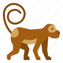 animals, ape, circus, monkey, zoo icon