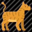 animals, kingdom, tiger, wildlife, zoo icon
