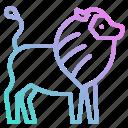 animals, kingdom, lion, mammal, zoo icon