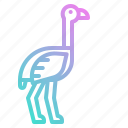 bird, fast, ostrich, wildlife, zoo