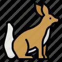 animal, animals, fox, kingdom, mammal, zoo icon