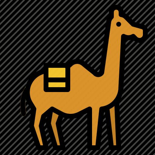 animal, camel, desert, kingdom, zoo icon