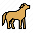animals, dog, kingdom, mammal, pet icon