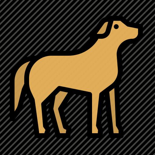 animals, dog, kingdom, mammal, pet icon
