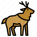 animals, deer, mammal, moose, zoo icon