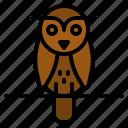 animals, bird, hunter, owl, wild