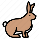 animals, bunny, rabbit, wild, zoo icon