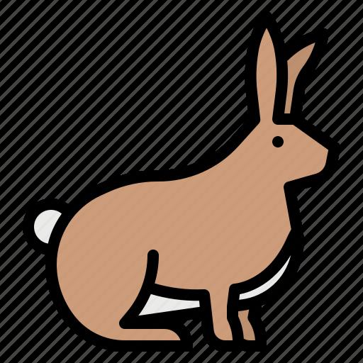 animals, bunny, rabbit, wild, zoo icon