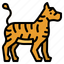 animals, kingdom, tiger, wildlife, zoo icon