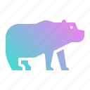 animal, bear, life, polar, wild, zoo icon