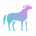 animal, animals, dog, kingdom, mammal, pet icon