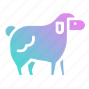 animal, farm, goat, lam, sheep icon