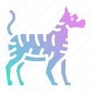 animal, animals, kingdom, tiger, wildlife, zoo icon