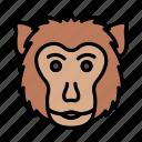 gorilla, monkey, chimpanzee, wild, animal