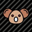 koala, animal, wild, zoo, wombat