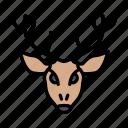 reindeer, animal, wild, zoo, head