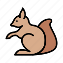 squirrel, animal, forest, zoo, rodent