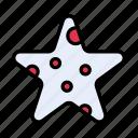 starfish, seafood, water, animal, sea