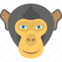 animal face, black monkey, face of a monkey, monkey face, smiling monkey icon