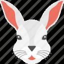 cute animal, long ears, rabbit face, white fur, white rabbit