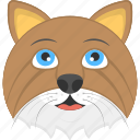 brown cat, hairy cat, old cat face, pet animal, whiskers icon