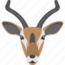 brown gazelle, gazelle face, grassland, long horns, wild animals icon