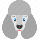 dog face, domestic animal, grey poodle, pet animal, poodle face icon