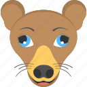 brown chiwawa, chiwawa face, dog face, domestic animal, pet animal icon
