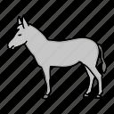 animal, countryside, donkey icon