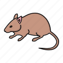animal, mouse, rat, rodent