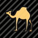 animal, camel, desert, egypt, ramadhan, sand, zoo