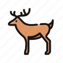 animal, christmas, deer, elk, rudolph, santa, wild