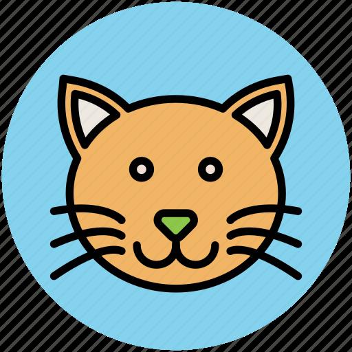 Abyssinian Cat Lynx