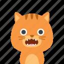 cat, face