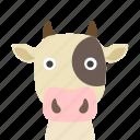 cow, face