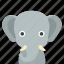 elephant, face