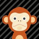 face, monkey