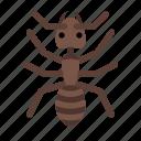 animal, animals, ant, cute, glass, sea, white icon