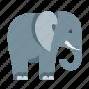 africa, african, animals, circus, elephant, nature, safari icon
