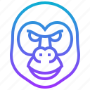 animal, ape, gorilla, monkey, wild
