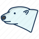 polar, bear